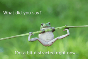 distracted frog just like how peoplemight emotionally respond while reading your content