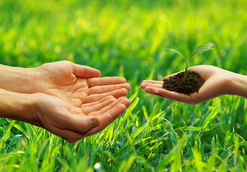 image of hands offering a plant same as outsourcing your marketing to grow