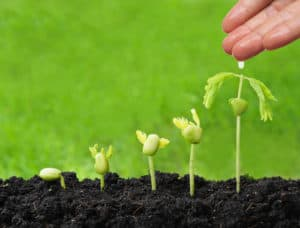row of seedlings, getting gradually bigger in size, with a hand dropping water on them to feed them